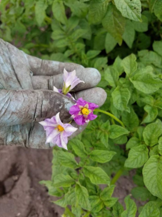 Glove and Flowers.PNG