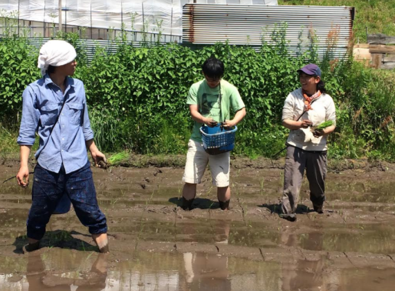 PCV Agriculture